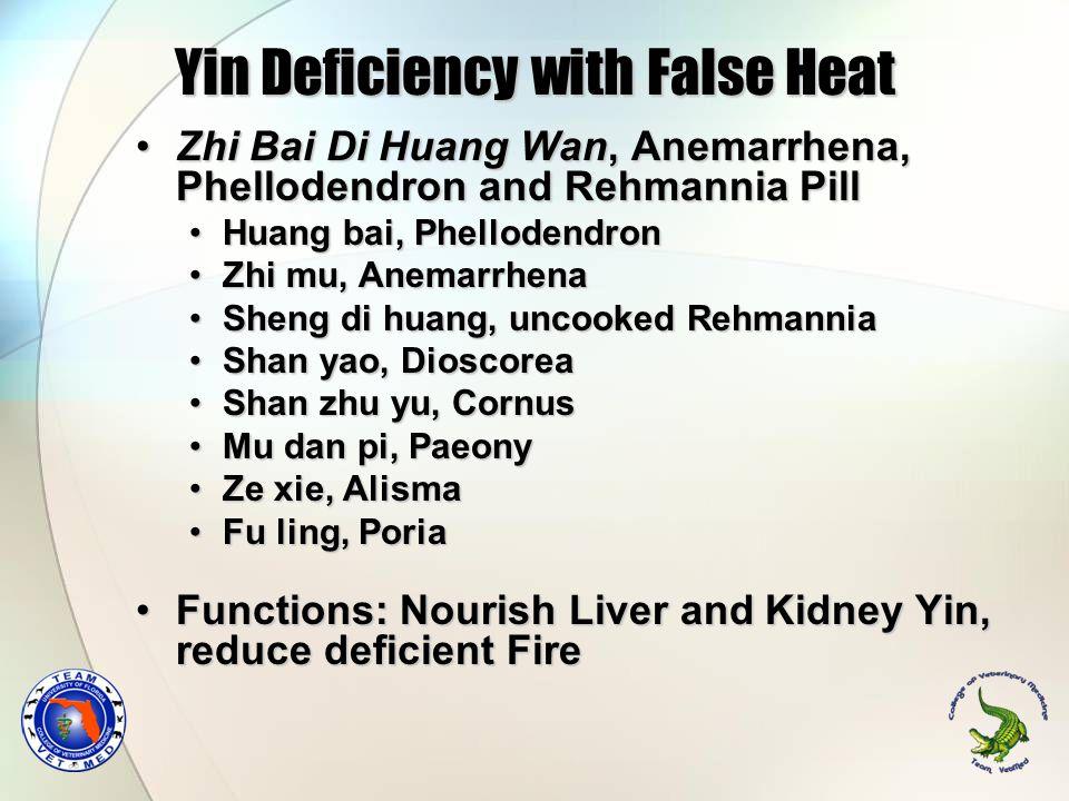 Yin Deficiency with False Heat Zhi Bai Di Huang Wan, Anemarrhena, Phellodendron and Rehmannia PillZhi Bai Di Huang Wan, Anemarrhena, Phellodendron and