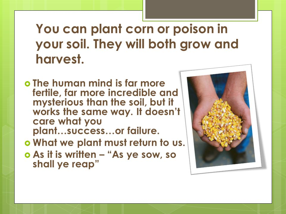 You can plant corn or poison in your soil. They will both grow and harvest.  The human mind is far more fertile, far more incredible and mysterious t