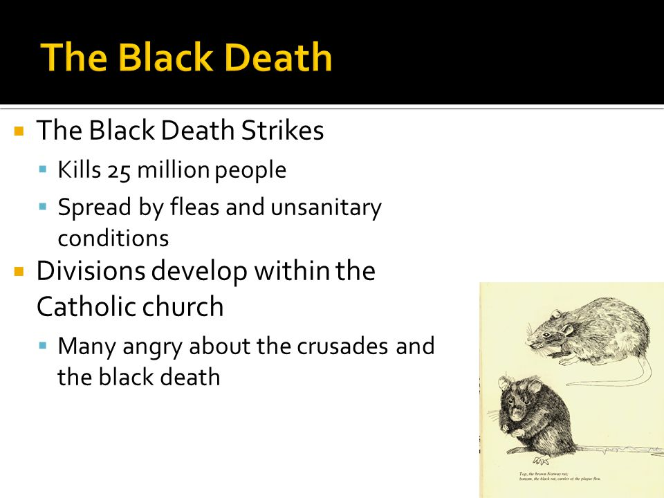  The Black Death Strikes  Kills 25 million people  Spread by fleas and unsanitary conditions  Divisions develop within the Catholic church  Many angry about the crusades and the black death