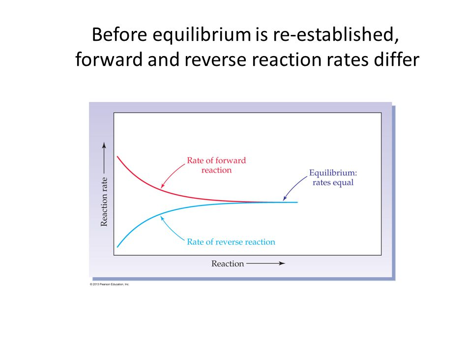 Before equilibrium is re-established, forward and reverse reaction rates differ