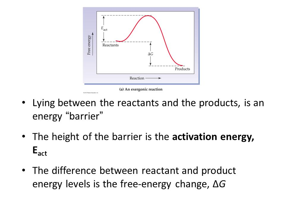 "Lying between the reactants and the products, is an energy ""barrier"" The height of the barrier is the activation energy, E act The difference between"