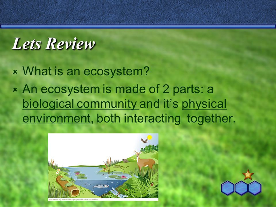 Lets Review  What is an ecosystem.