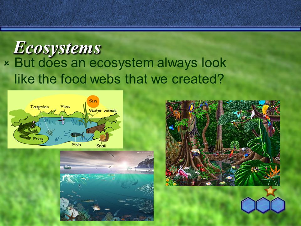 Ecosystems  But does an ecosystem always look like the food webs that we created