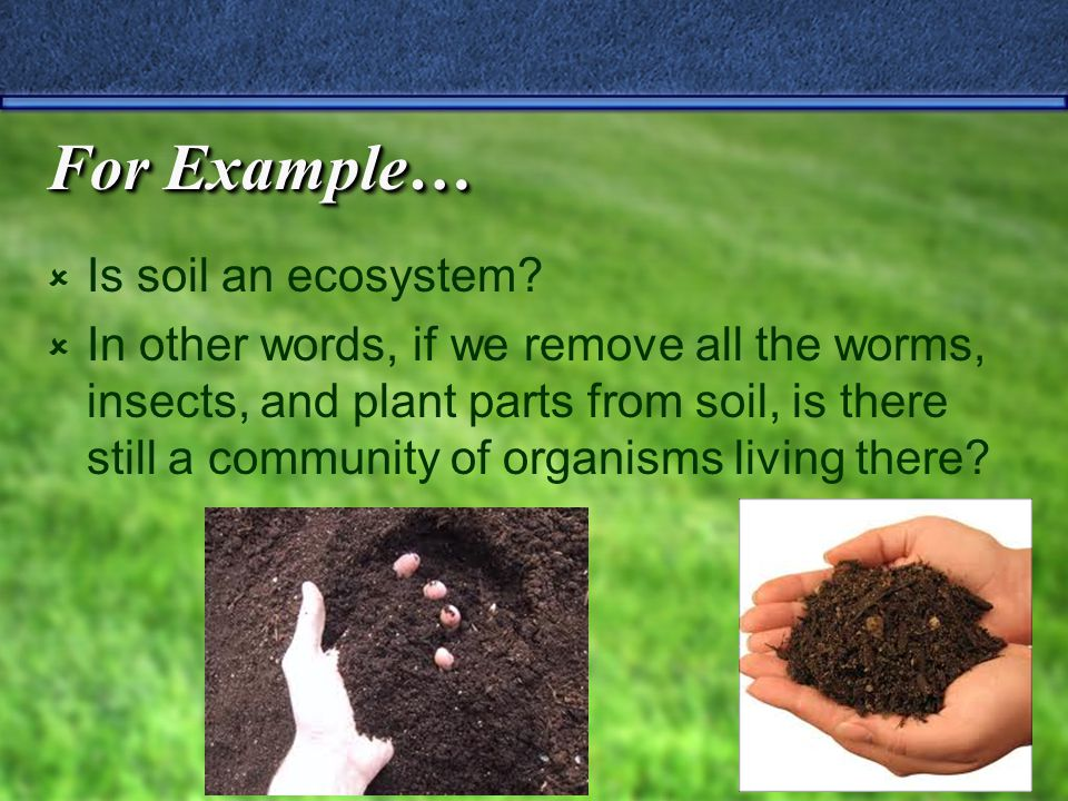 For Example…  Is soil an ecosystem.