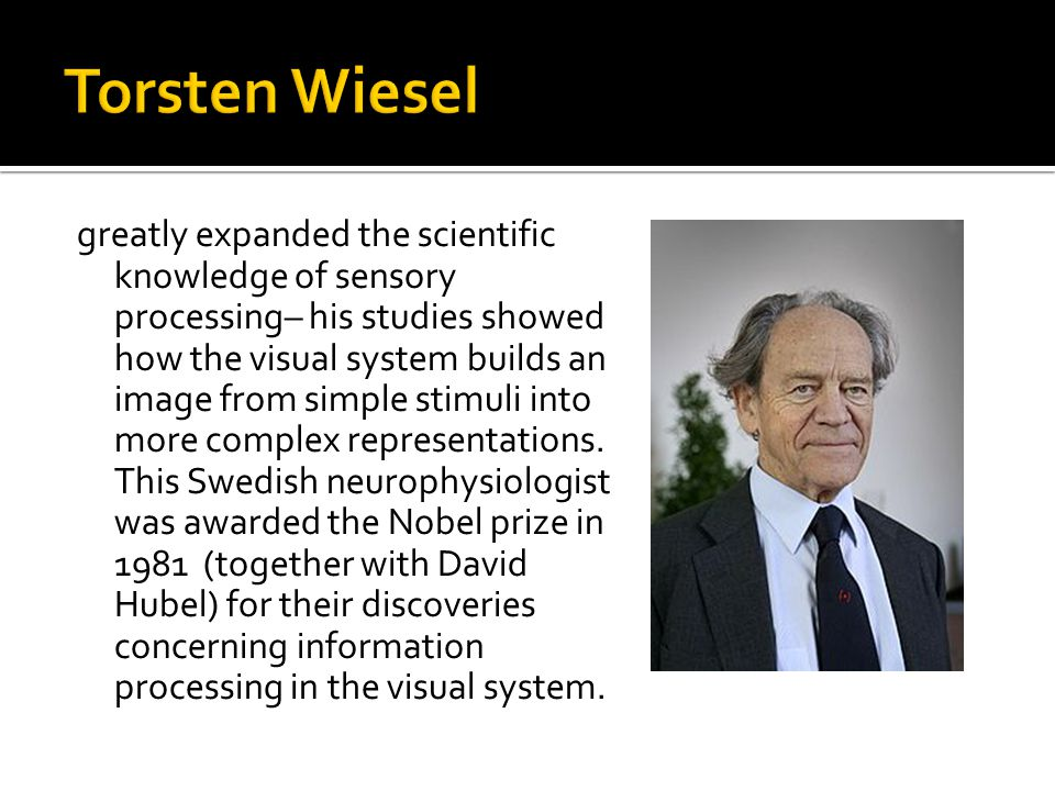 greatly expanded the scientific knowledge of sensory processing– his studies showed how the visual system builds an image from simple stimuli into more complex representations.