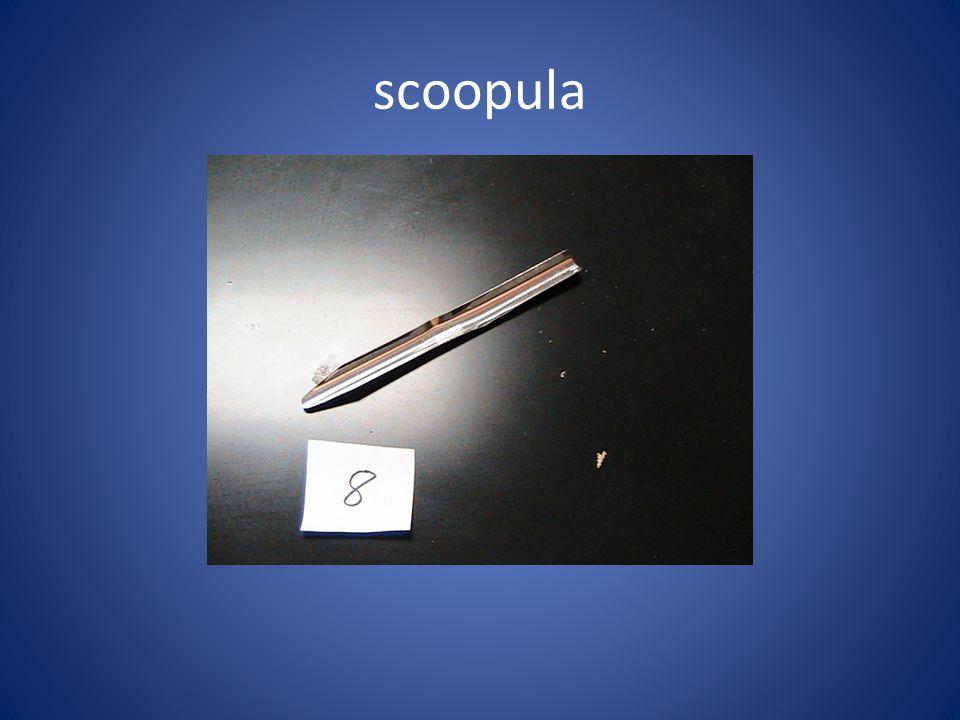scoopula