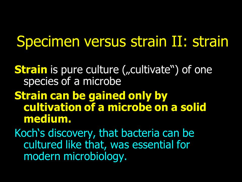 "Specimen versus strain II: strain Strain is pure culture (""cultivate"") of one species of a microbe Strain can be gained only by cultivation of a micro"