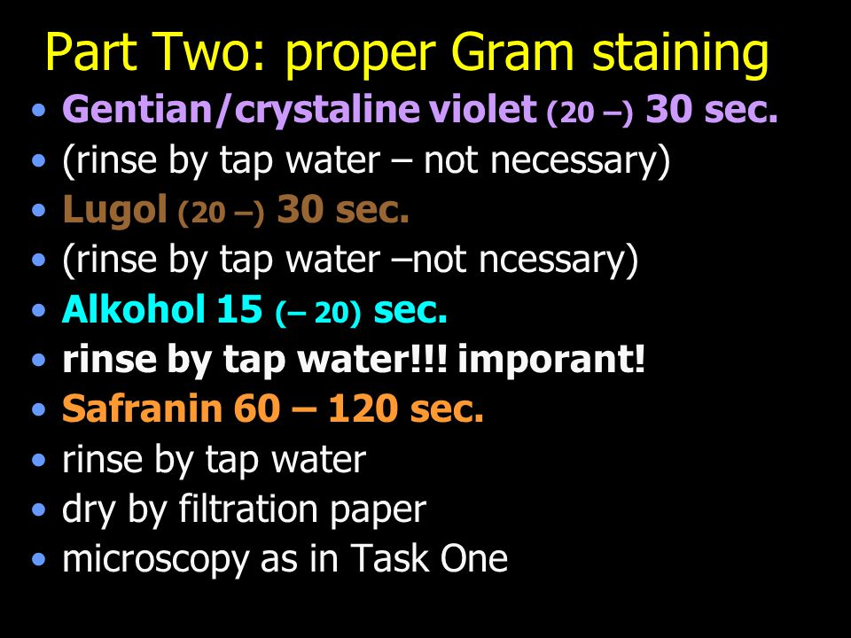 Part Two: proper Gram staining Gentian/crystaline violet (20 –) 30 sec. (rinse by tap water – not necessary) Lugol (20 –) 30 sec. (rinse by tap water