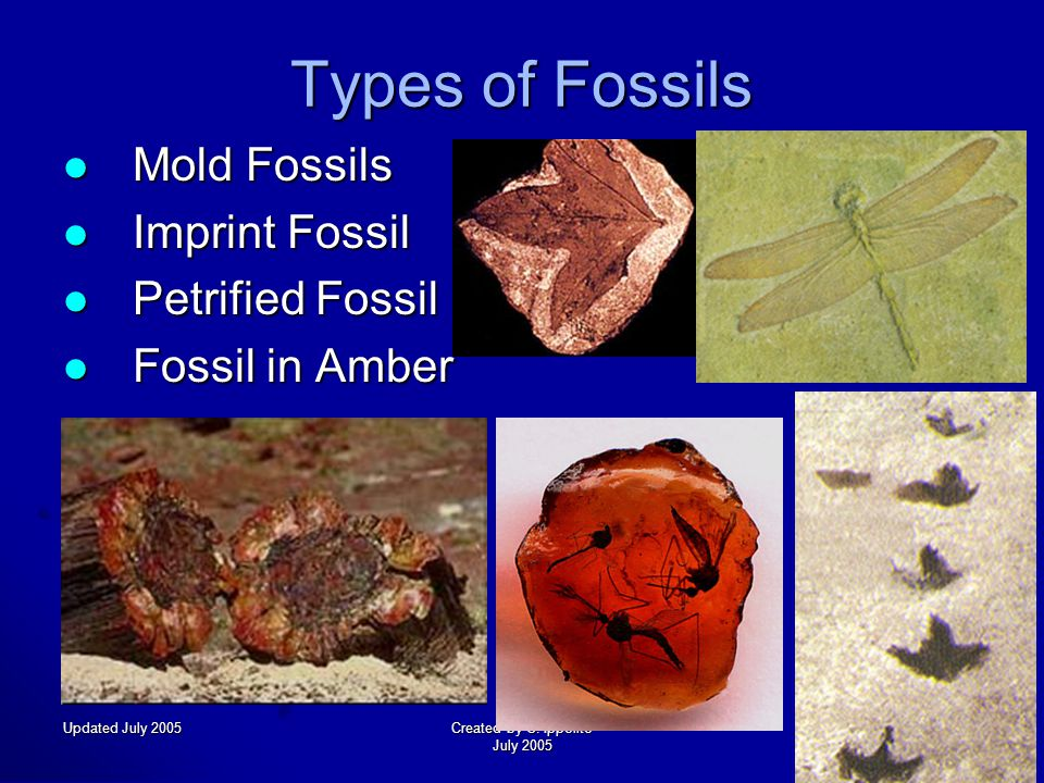 Updated July 2005Created by C. Ippolito July 2005 How Fossils Form Fossils form in sedimentary rock Fossils form in sedimentary rock Rock exposed to r