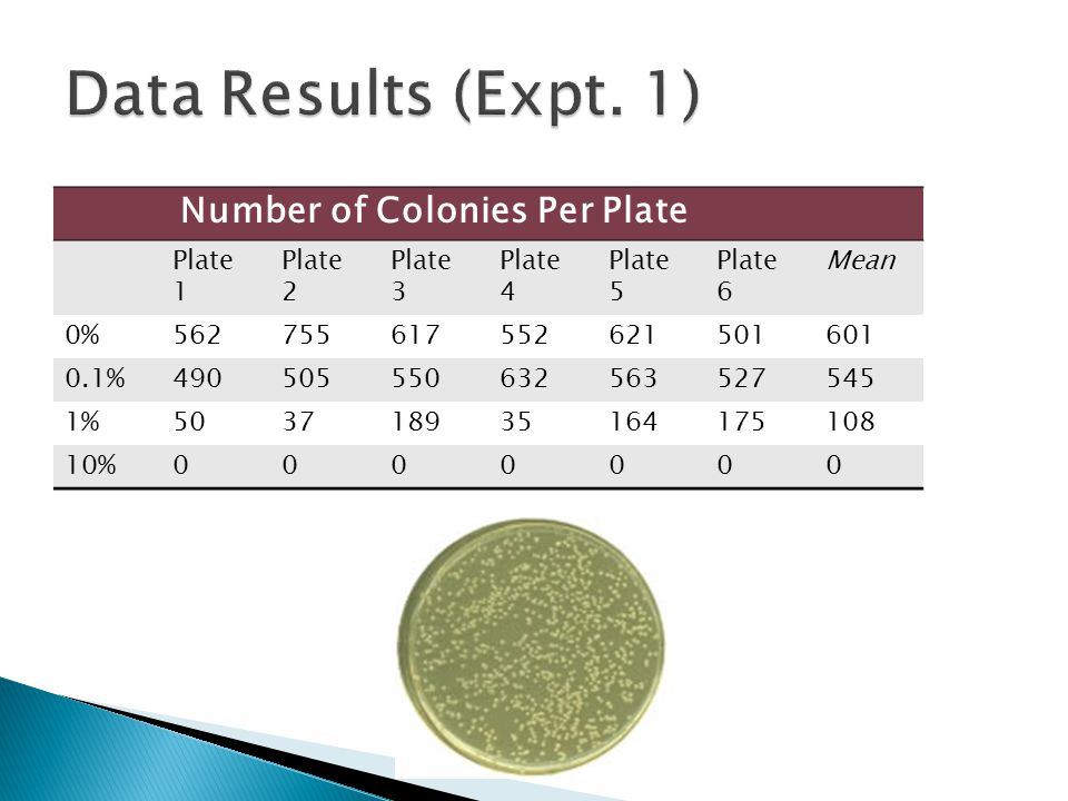 Number of Colonies Per Plate Plate 1 Plate 2 Plate 3 Plate 4 Plate 5 Plate 6 Mean 0%562755617552621501601 0.1%490505550632563527545 1%5037189351641751