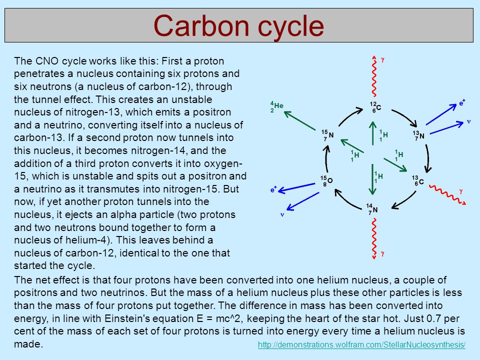 Carbon cycle The CNO cycle works like this: First a proton penetrates a nucleus containing six protons and six neutrons (a nucleus of carbon-12), through the tunnel effect.