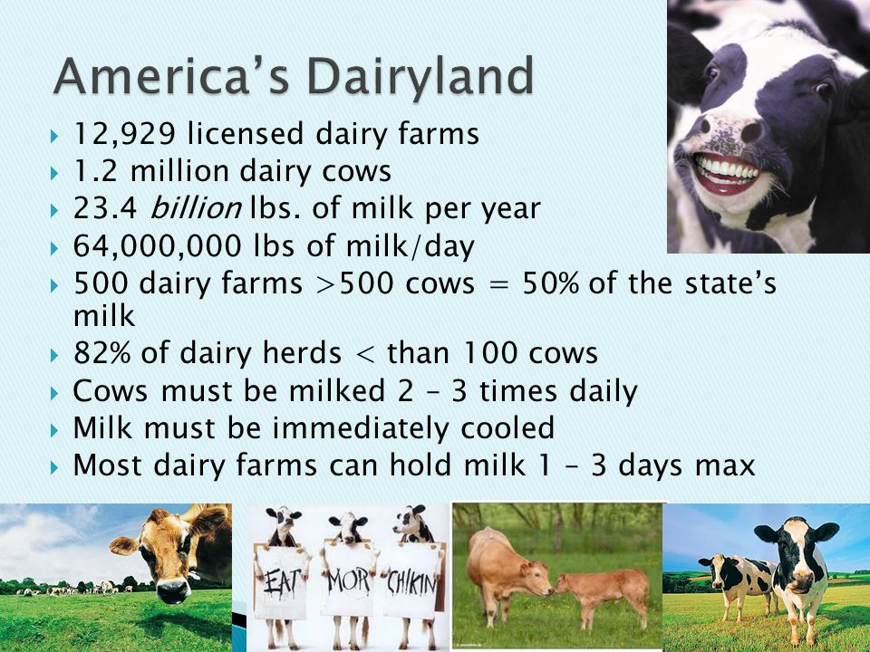  12,929 licensed dairy farms  1.2 million dairy cows  23.4 billion lbs.