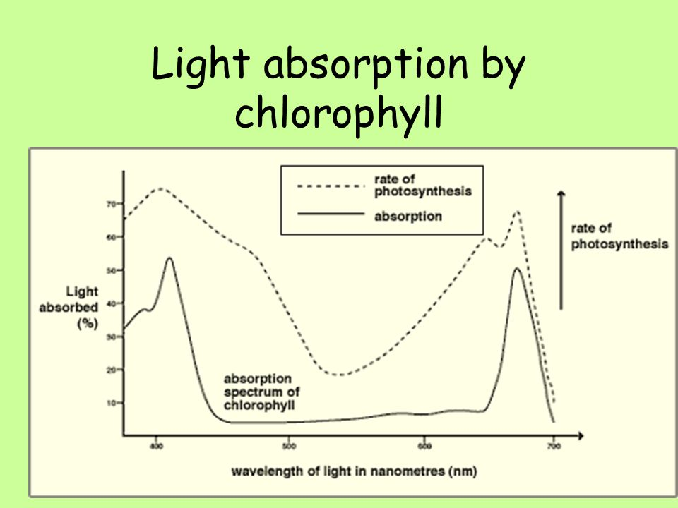 Absorption of Light by Chlorophyll Higher Biology