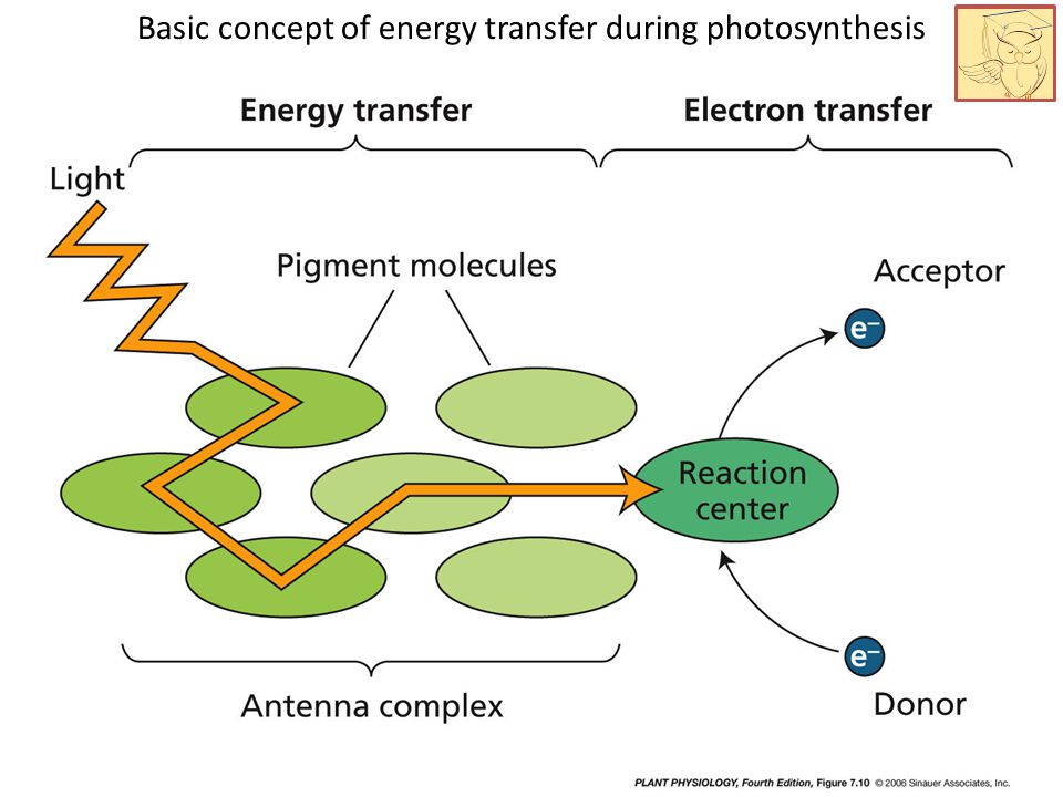 Basic concept of energy transfer during photosynthesis