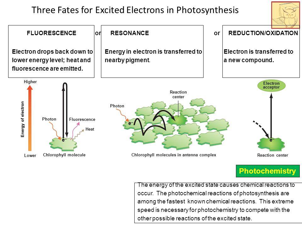 Three Fates for Excited Electrons in Photosynthesis Reaction center Fluorescence Heat Photon e–e– e–e– Electron acceptor Chlorophyll molecules in ante