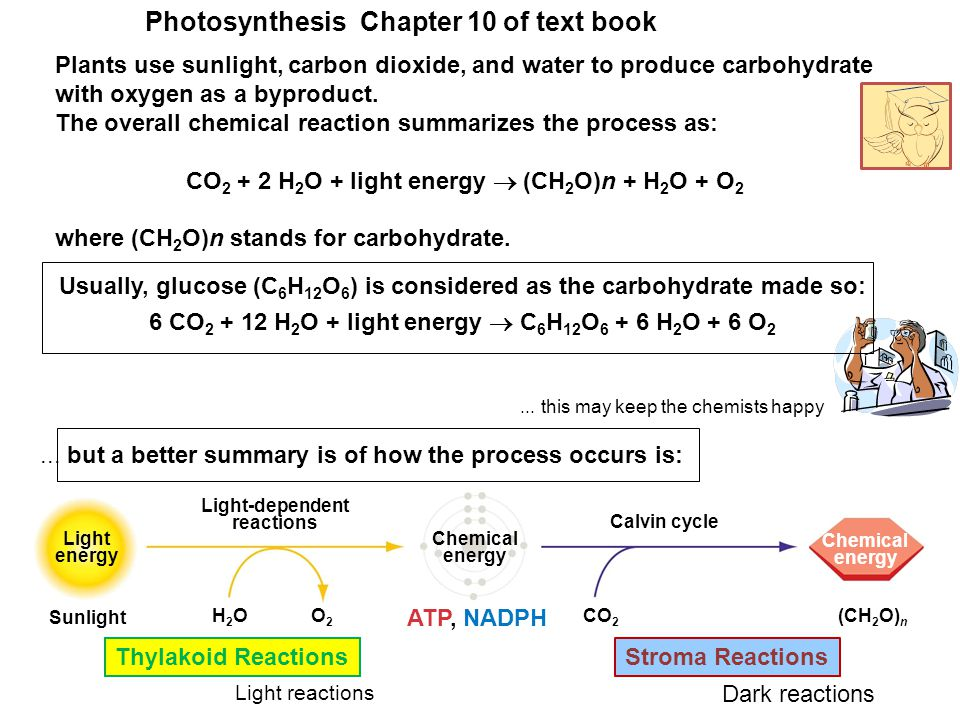 Plants use sunlight, carbon dioxide, and water to produce carbohydrate with oxygen as a byproduct.