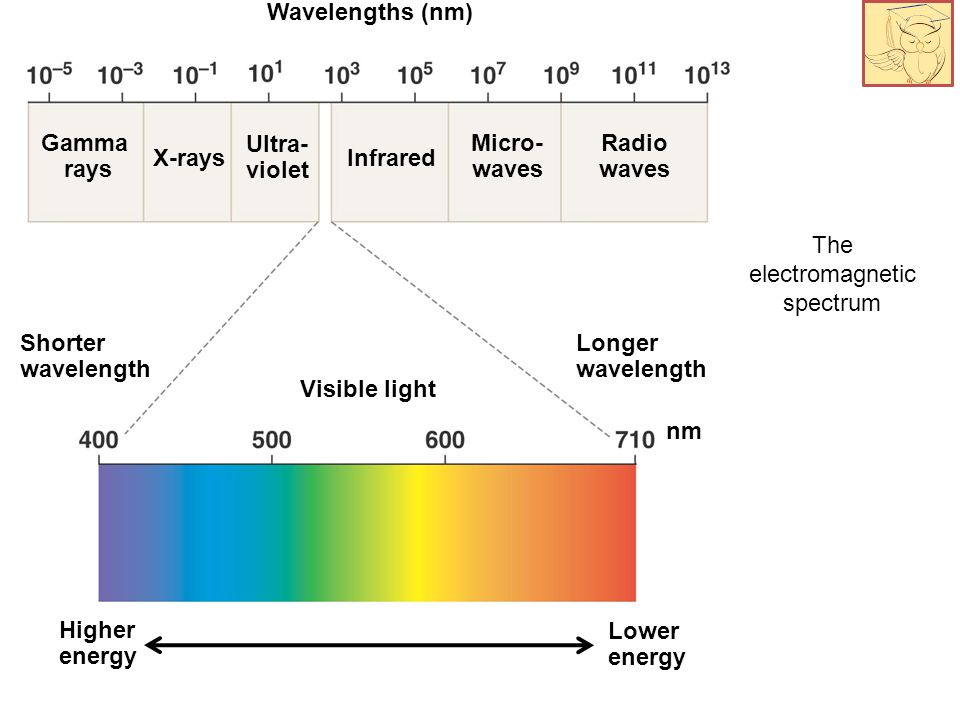 The electromagnetic spectrum Wavelengths (nm) Gamma rays X-rays Ultra- violet Infrared Micro- waves Radio waves Shorter wavelength Visible light Longer wavelength nm Higher energy Lower energy