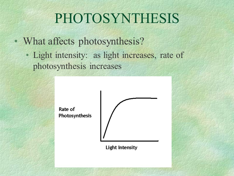 PHOTOSYNTHESIS What affects photosynthesis? Light intensity: as light increases, rate of photosynthesis increases