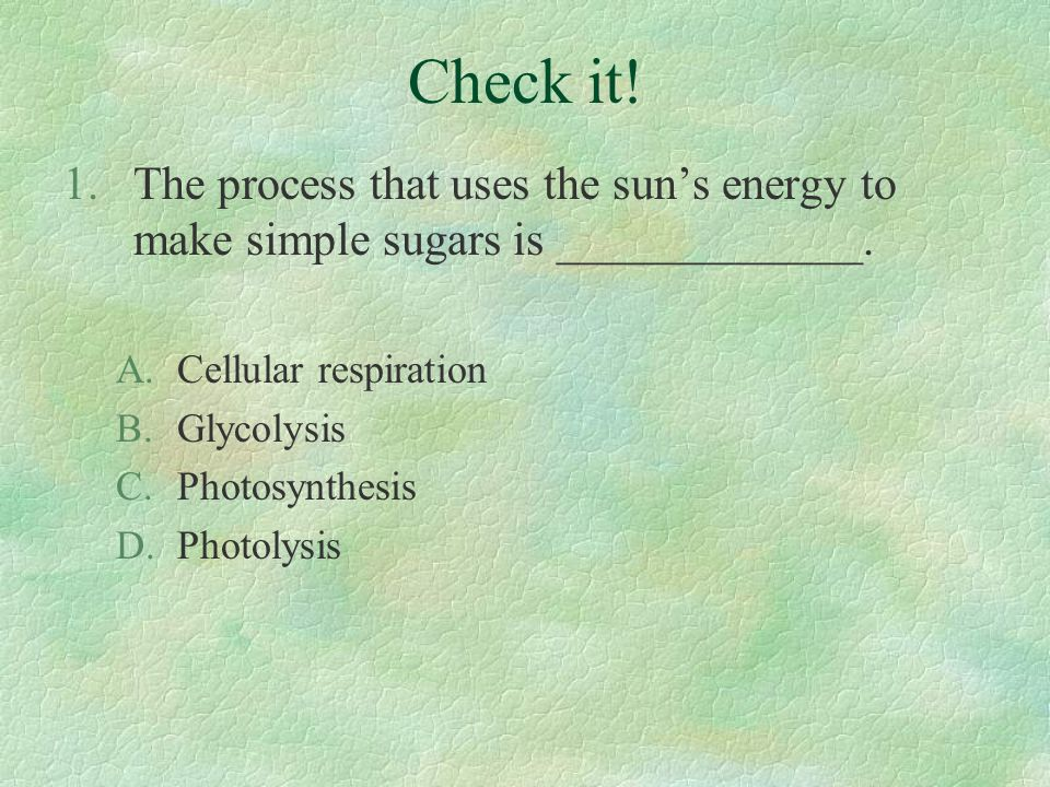 Check it! 1.The process that uses the sun's energy to make simple sugars is _____________. A.Cellular respiration B.Glycolysis C.Photosynthesis D.Phot