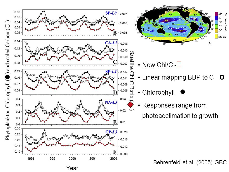 Spatially… Behrenfeld et al. (2005) GBC Now Chl/C -  Linear mapping BBP to C - O Chlorophyll - ● Responses range from photoacclimation to growth