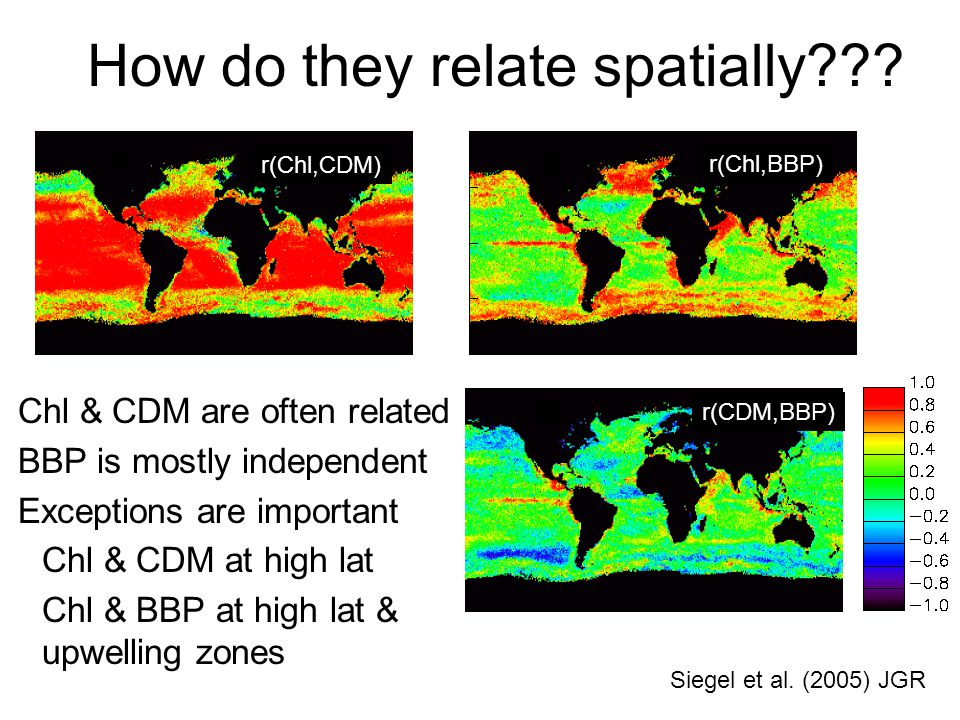 How do they relate spatially . Siegel et al.