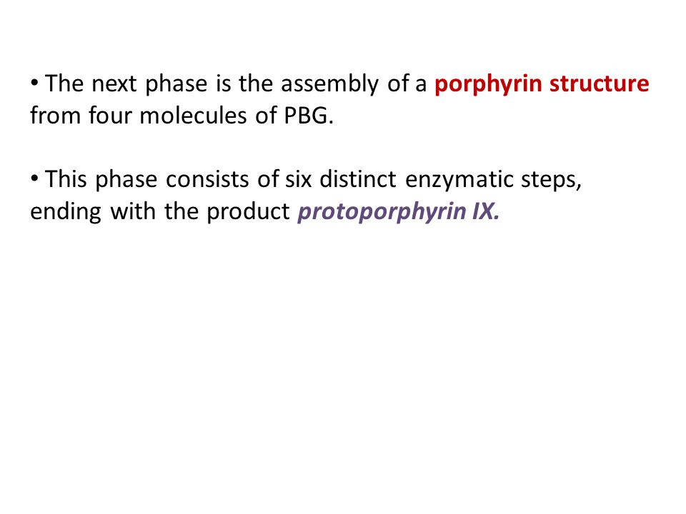 The next phase is the assembly of a porphyrin structure from four molecules of PBG.