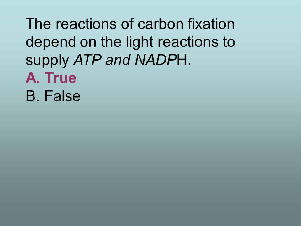 The reactions of carbon fixation depend on the light reactions to supply ATP and NADPH. A. True B. False