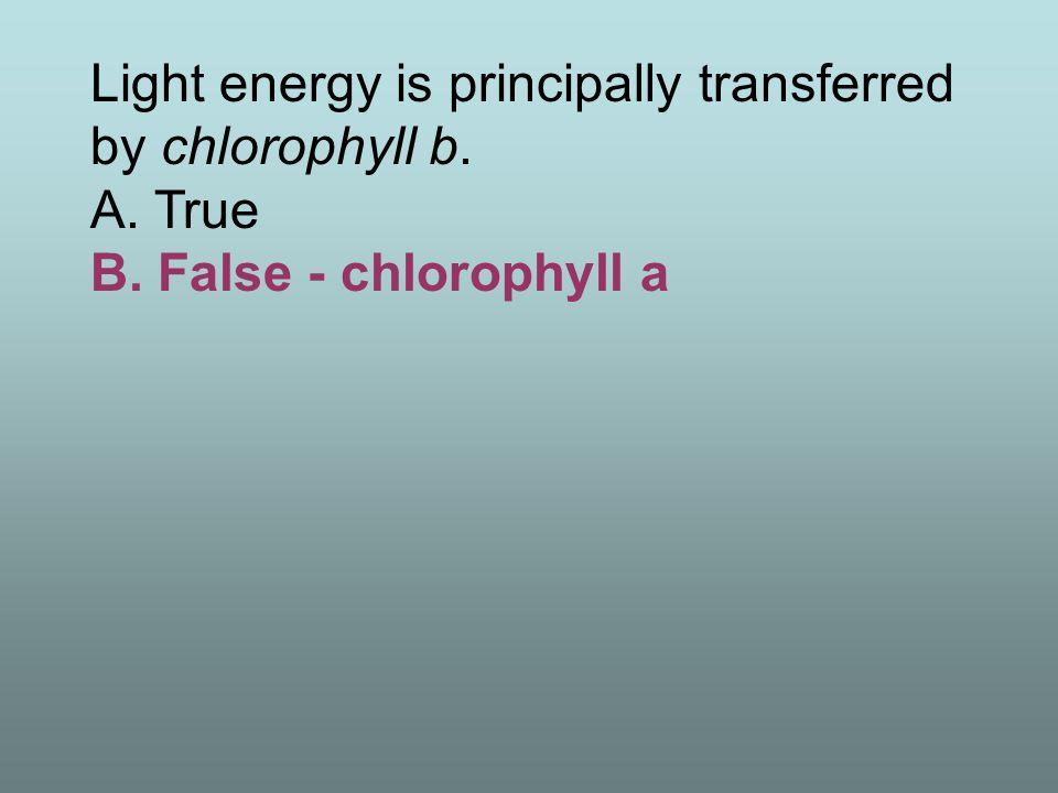 Light energy is principally transferred by chlorophyll b. A. True B. False - chlorophyll a