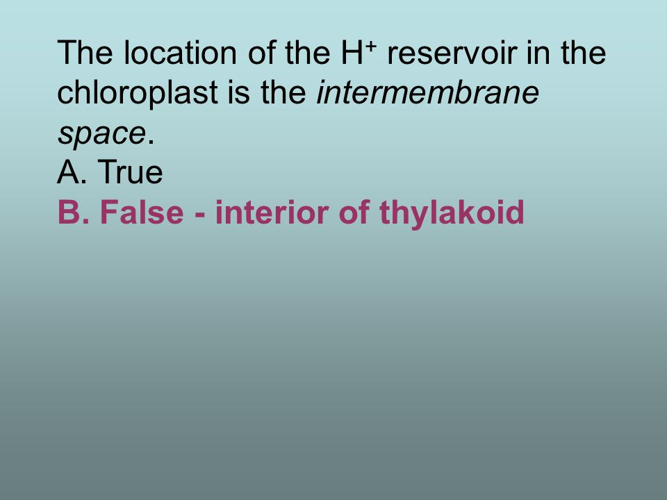 The location of the H + reservoir in the chloroplast is the intermembrane space. A. True B. False - interior of thylakoid