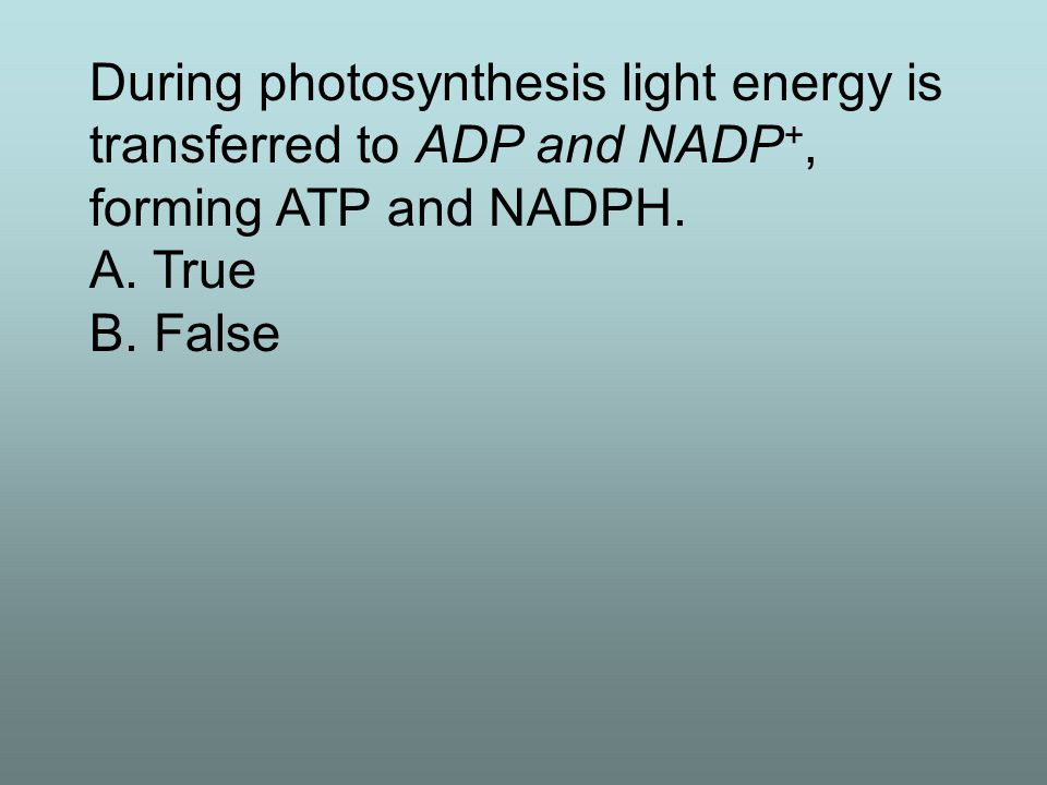 The source of electrons in photosynthesis is light. A. True B. False - water