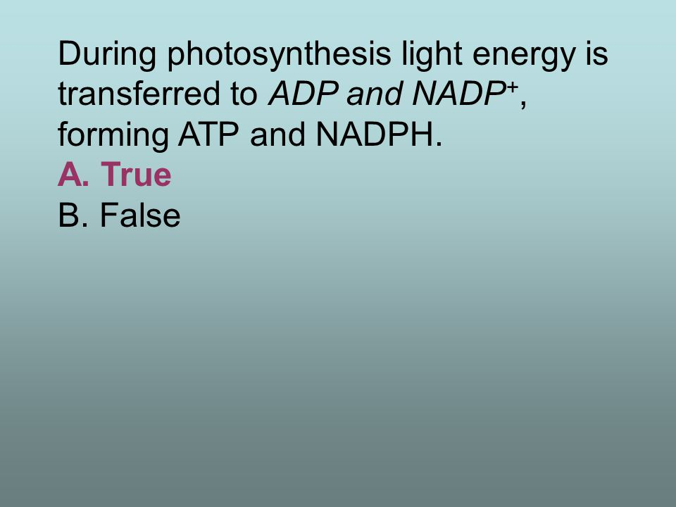 The reactions of carbon fixation depend on the light reactions to supply ATP and NADPH.