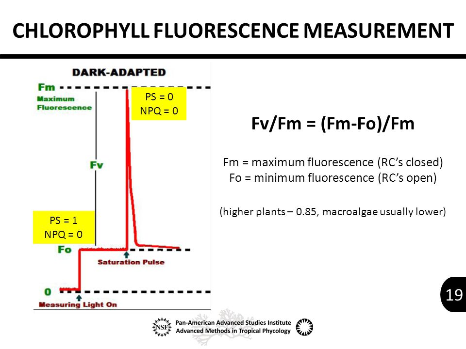 19 PS = 0 NPQ = 0 PS = 1 NPQ = 0 CHLOROPHYLL FLUORESCENCE MEASUREMENT Fv/Fm = (Fm-Fo)/Fm Fm = maximum fluorescence (RC's closed) Fo = minimum fluorescence (RC's open) (higher plants – 0.85, macroalgae usually lower)