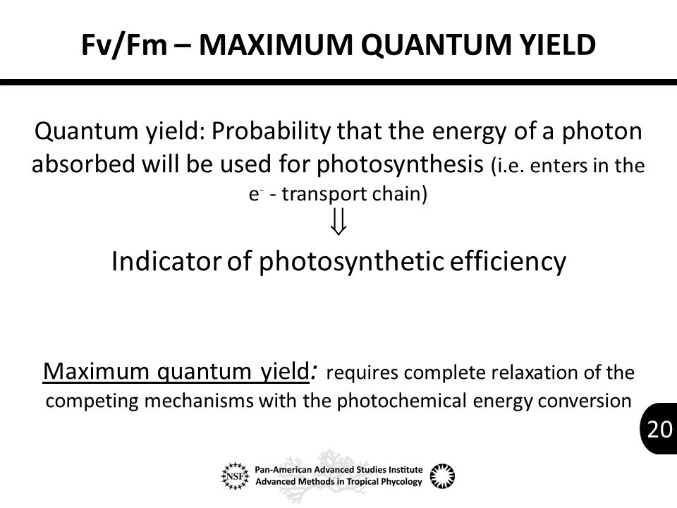20 Fv/Fm – MAXIMUM QUANTUM YIELD Quantum yield: Probability that the energy of a photon absorbed will be used for photosynthesis (i.e.