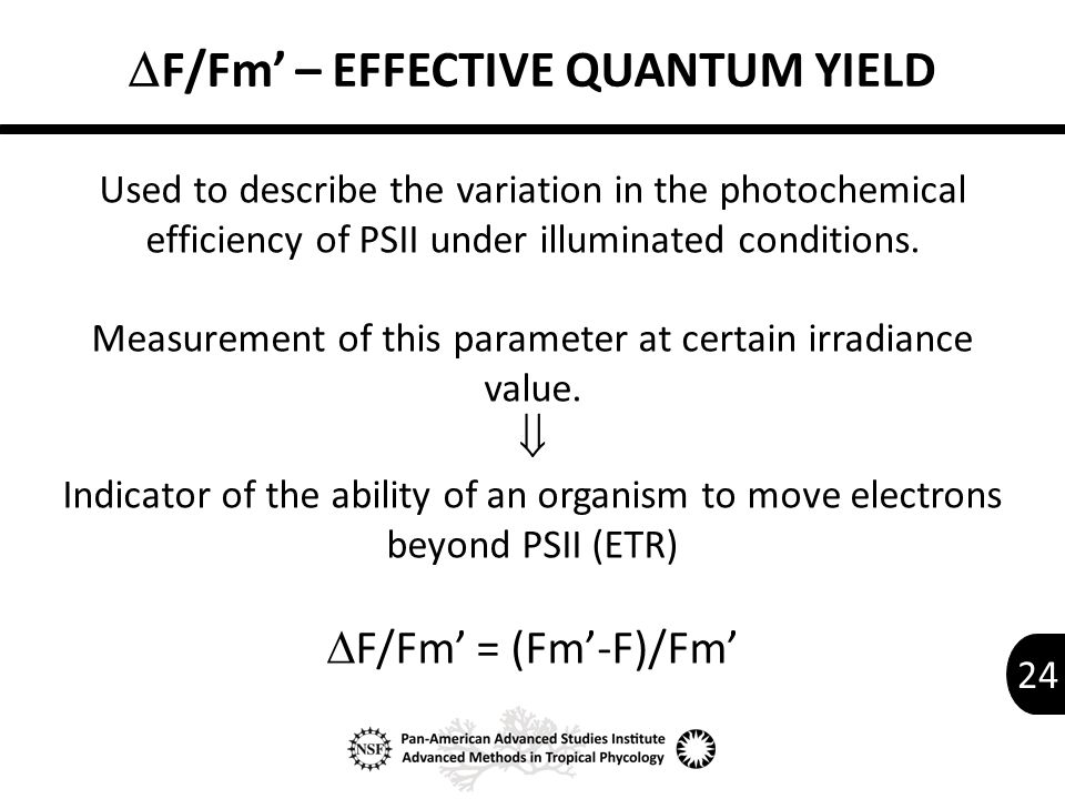 24  F/Fm' – EFFECTIVE QUANTUM YIELD Used to describe the variation in the photochemical efficiency of PSII under illuminated conditions.