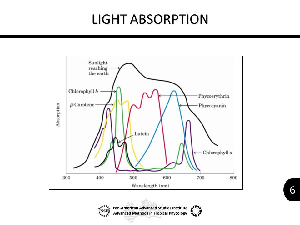 6 LIGHT ABSORPTION