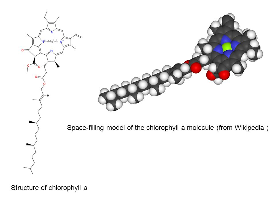 Space-filling model of the chlorophyll a molecule (from Wikipedia ) Structure of chlorophyll a