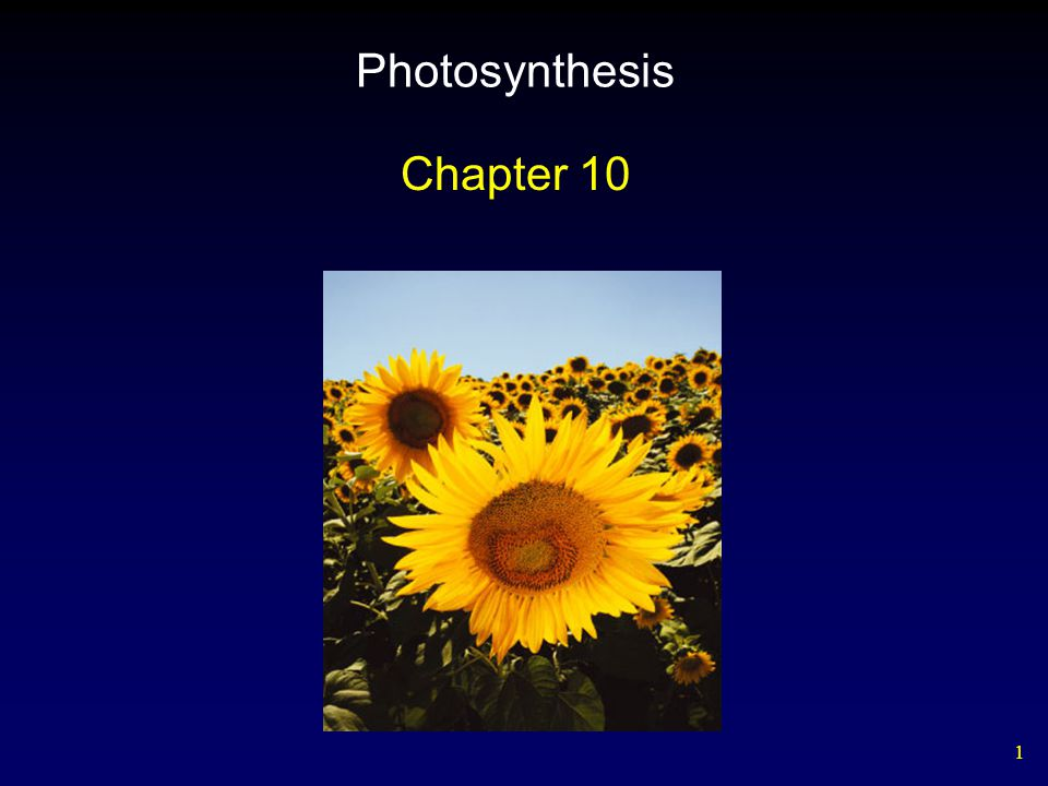 1 Photosynthesis Chapter 10