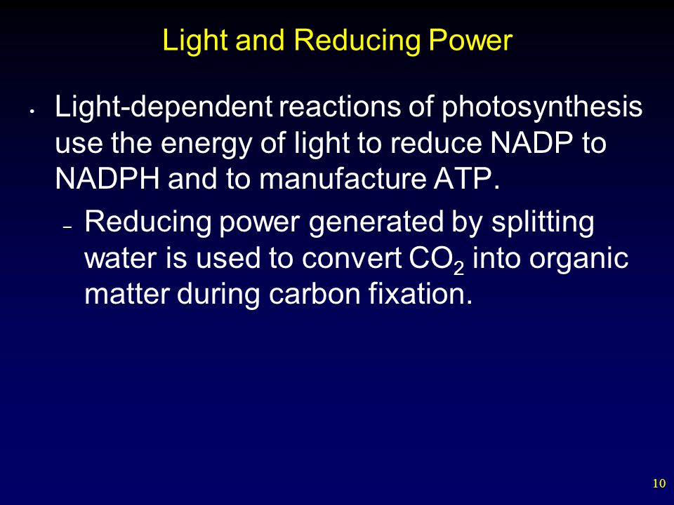 10 Light and Reducing Power Light-dependent reactions of photosynthesis use the energy of light to reduce NADP to NADPH and to manufacture ATP.