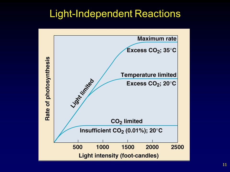 11 Light-Independent Reactions