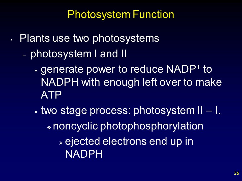 26 Photosystem Function Plants use two photosystems – photosystem I and II  generate power to reduce NADP + to NADPH with enough left over to make ATP  two stage process: photosystem II – I.