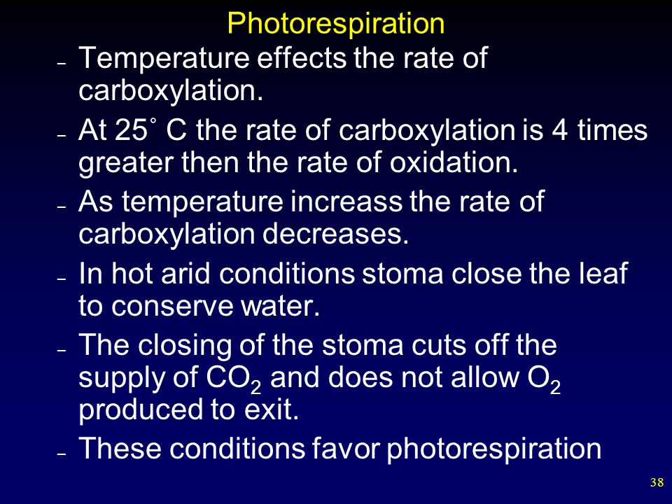 38 Photorespiration – Temperature effects the rate of carboxylation. – At 25˚ C the rate of carboxylation is 4 times greater then the rate of oxidatio