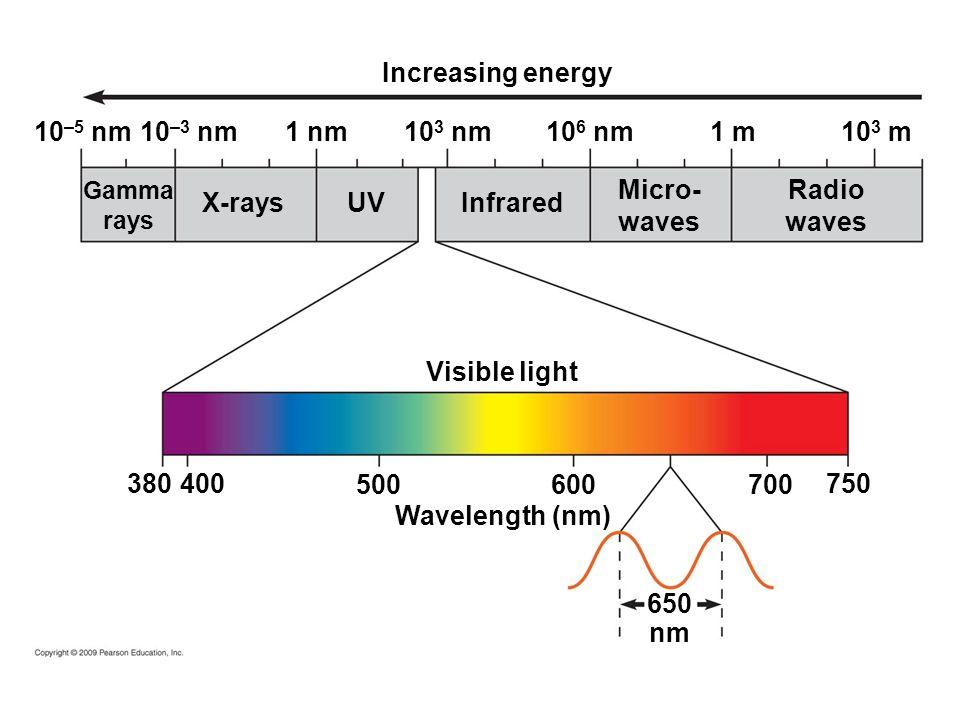 Wavelength (nm) 10 –5 nm Increasing energy Visible light 650 nm 10 –3 nm 1 nm10 3 nm10 6 nm 1 m 10 3 m 380 400 500 600700 750 Radio waves Micro- waves Infrared X-rays UV Gamma rays