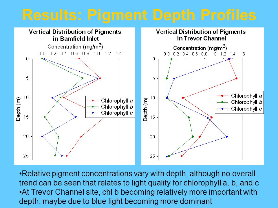 Results: Pigment Depth Profiles Relative pigment concentrations vary with depth, although no overall trend can be seen that relates to light quality for chlorophyll a, b, and c At Trevor Channel site, chl b becoming relatively more important with depth, maybe due to blue light becoming more dominant