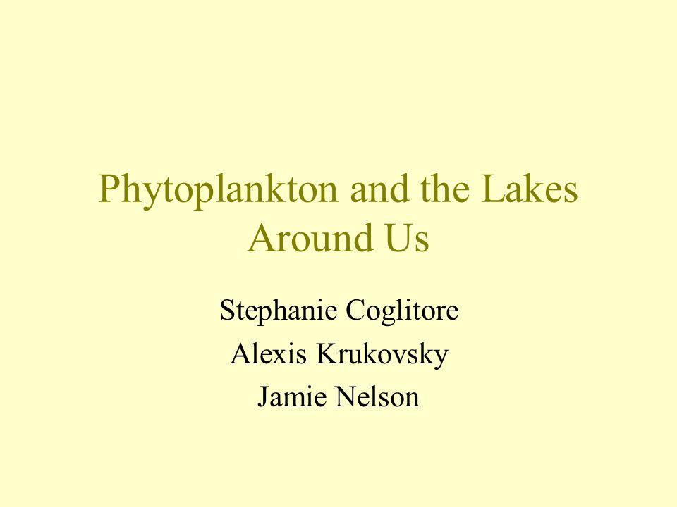 Phytoplankton and the Lakes Around Us Stephanie Coglitore Alexis Krukovsky Jamie Nelson