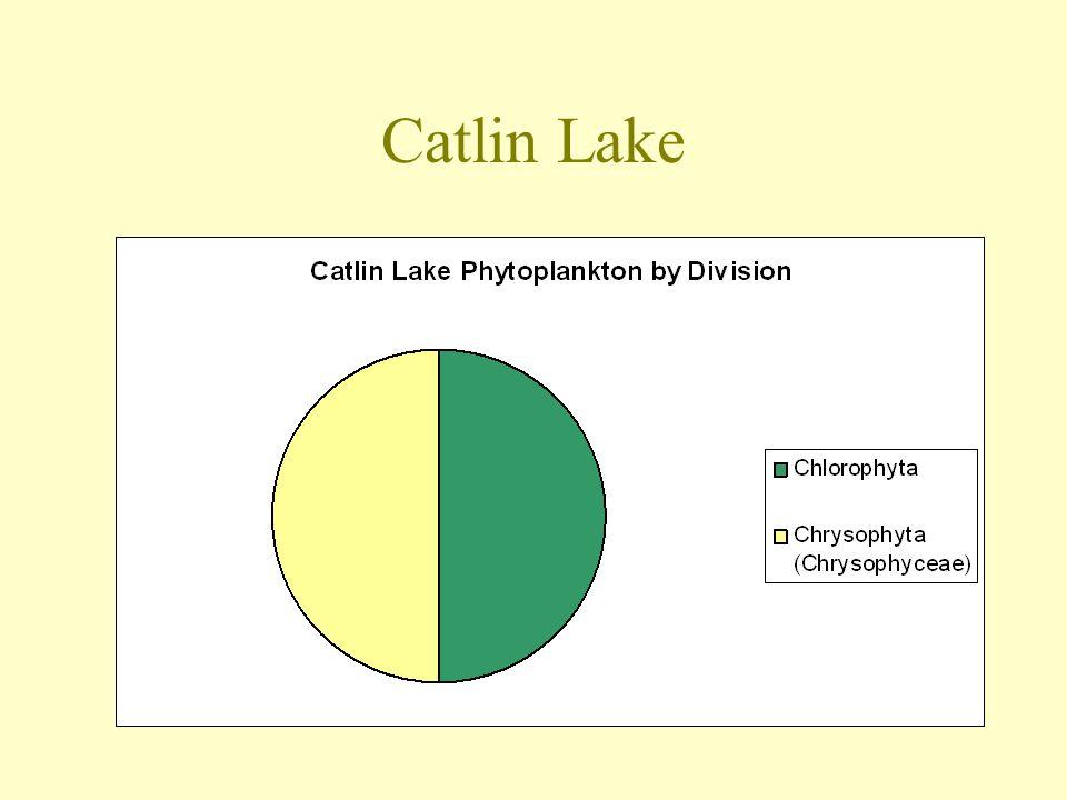 Catlin Lake