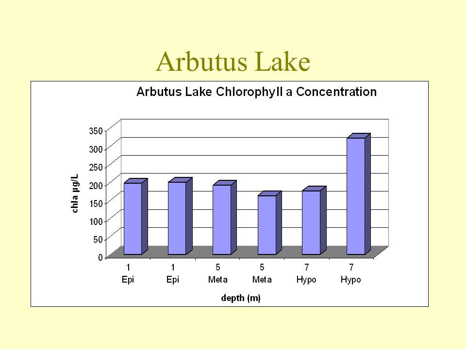 Arbutus Lake