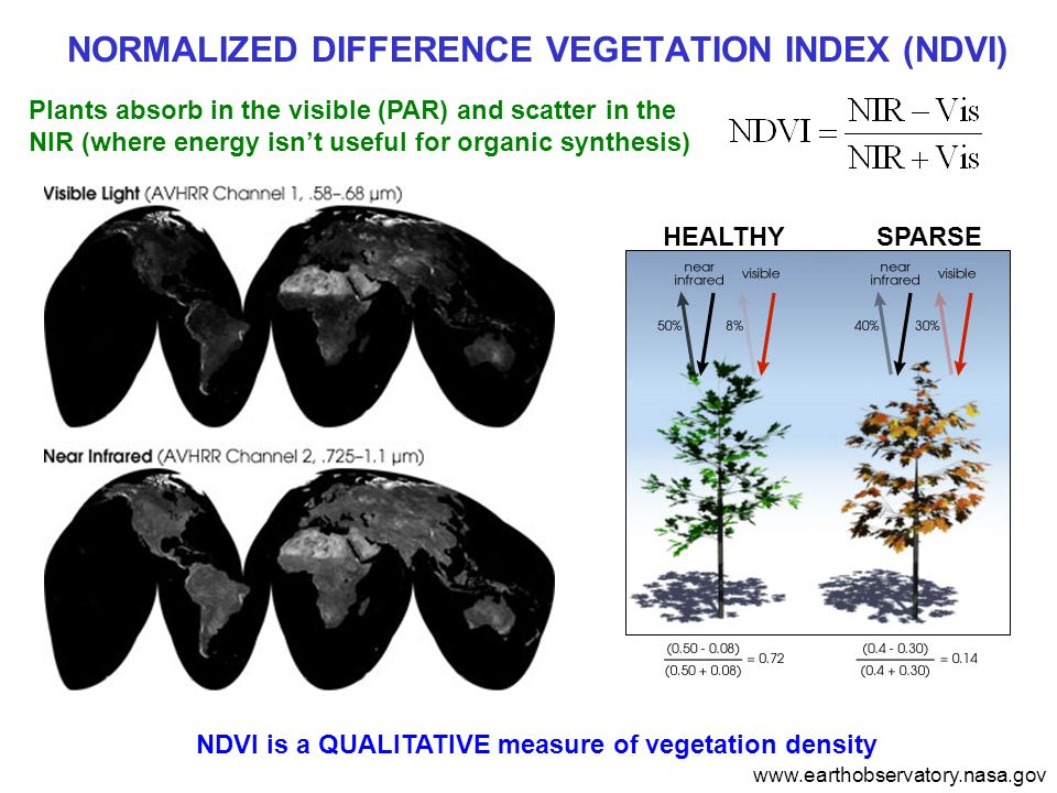 NORMALIZED DIFFERENCE VEGETATION INDEX (NDVI) Plants absorb in the visible (PAR) and scatter in the NIR (where energy isn't useful for organic synthesis) NDVI is a QUALITATIVE measure of vegetation density www.earthobservatory.nasa.gov HEALTHYSPARSE