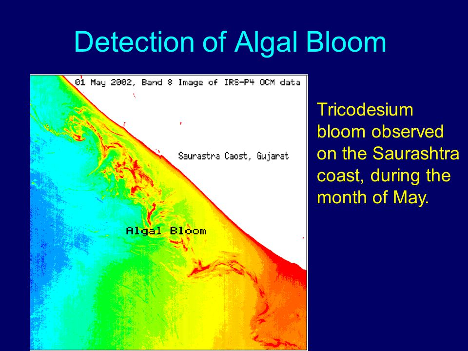 Detection of Algal Bloom Tricodesium bloom observed on the Saurashtra coast, during the month of May.