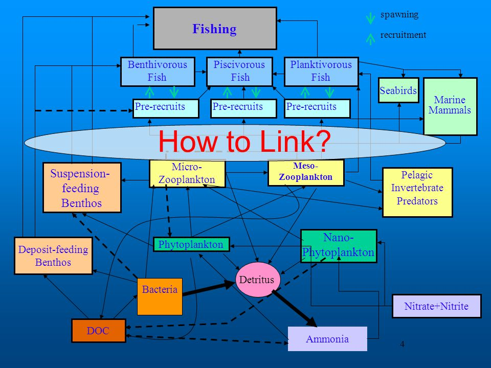 4 How to Link?