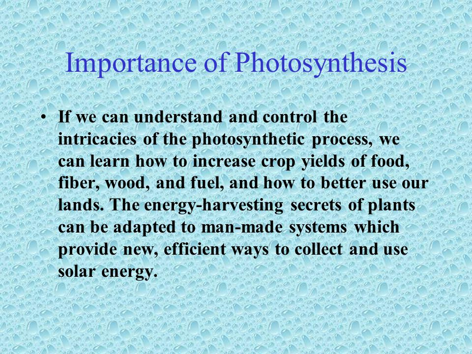 Importance of Photosynthesis If we can understand and control the intricacies of the photosynthetic process, we can learn how to increase crop yields of food, fiber, wood, and fuel, and how to better use our lands.